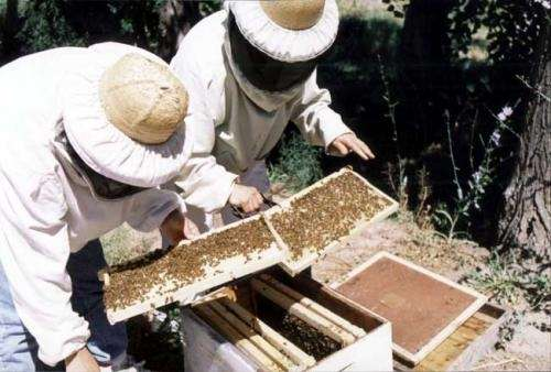 Cursos de capacitacion de apicultura e hidroponia