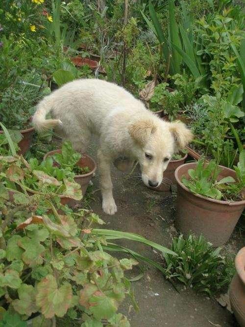 Adopta un perrito rescatado del abandono