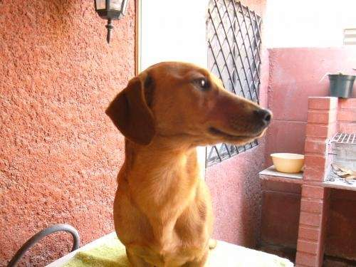Clínica veterinaria el vergel regala lindo perrito