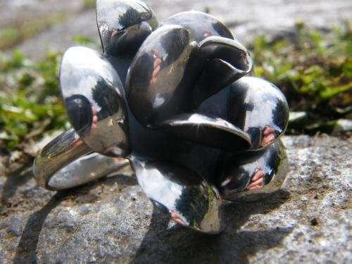 Fotos de Joyas de plata, venta  solo al por mayor. 3