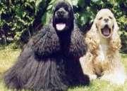 Peluquería canina 8.500 ( veterinarias /peluqueras)