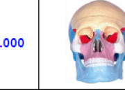 sistema oseo en resina,para estudio anatomia