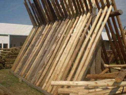 Eucaliptus corta vientos postes agricolas rollizos calibrados
