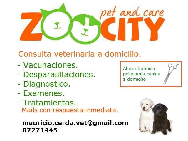 Médico veterinario a domicilio, consulta, desparasitación, vacunación y más.