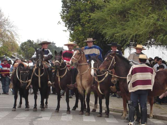 Chicha y pipeño de villa alegre 2016 - flete gratis a santiago
