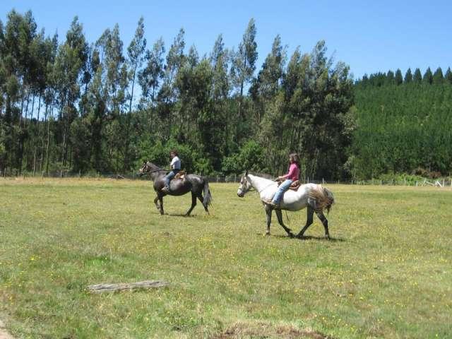 Al arrendar cabaña tendrá 1/2 día gratis con 2 caballos mansos