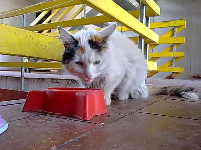 Hola regalo gatita abandonada para k la amen