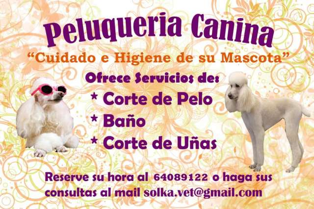 Peluqueria canina a domicilio sector santiago norte