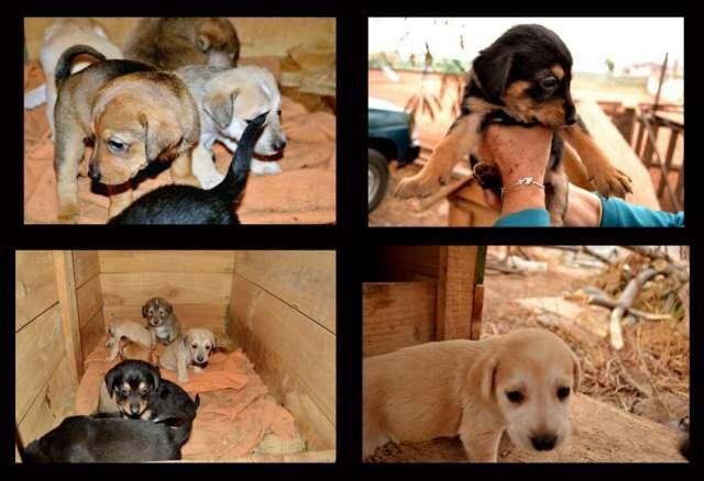 6 cachorros buscan hogar