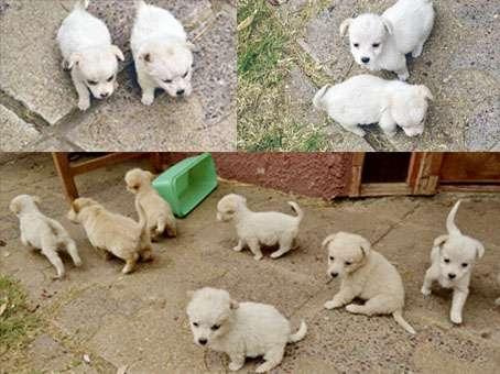 10 cachorros buscan hogar