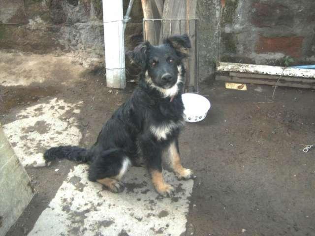 Se regala una cachorra de 6 meses mezcla