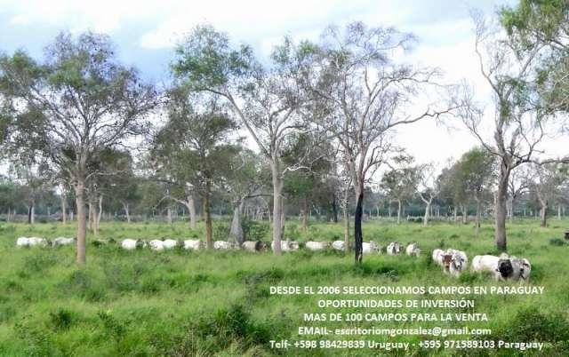 Paraguay. venta de campos seleccionados