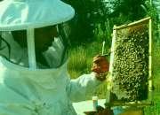 apiterapia; terapia con abejas a domicilio en santiago