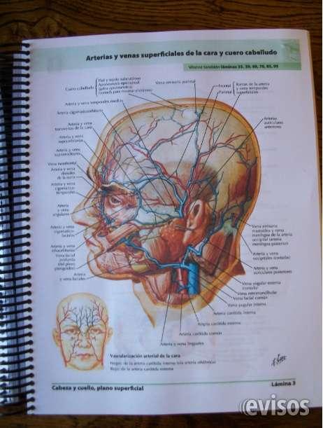 Atlas de anatomía humana de frank netter (6°edición) en Santiago ...
