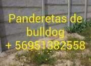 Panderetas de bulldog - REPARACIONES  951382558