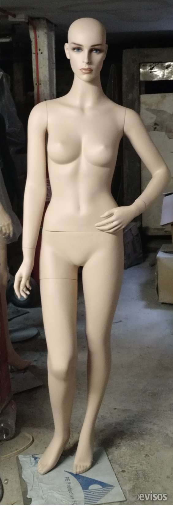 Cuerpo entero dama  para  exibir  vitrina