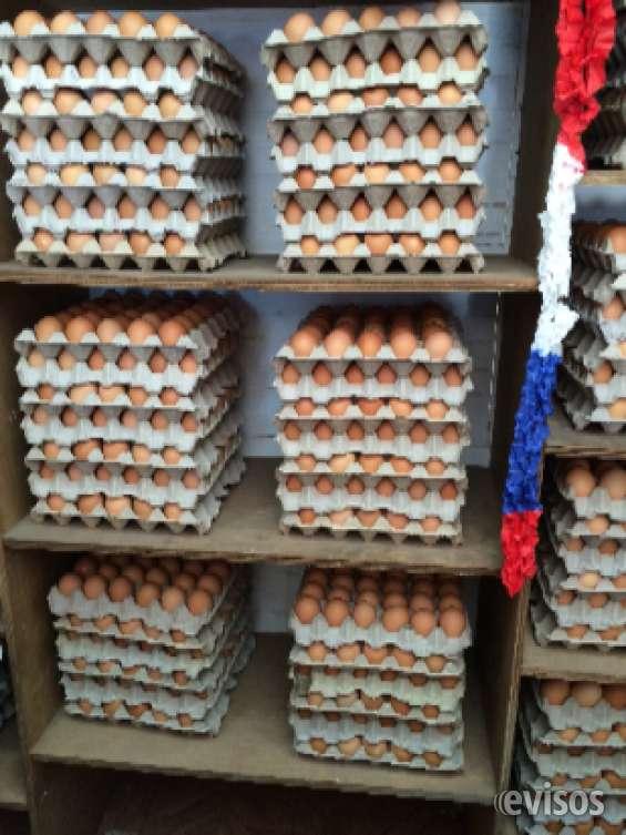 Venta de huevos por mayor