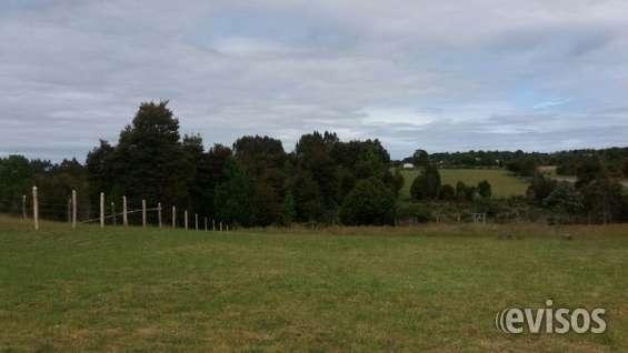 Campo 160 ha. ruta 5 cruce a maullin