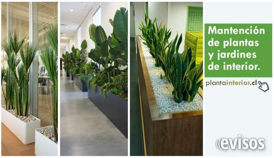 Mantencion de plantas de interior