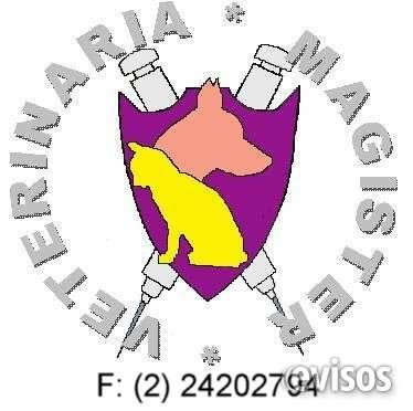 Clinica veterinaria magister - !!! consulta gratis ¡ ¡ ¡