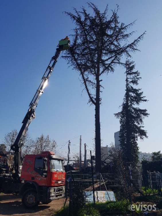 Corte y tala de árboles
