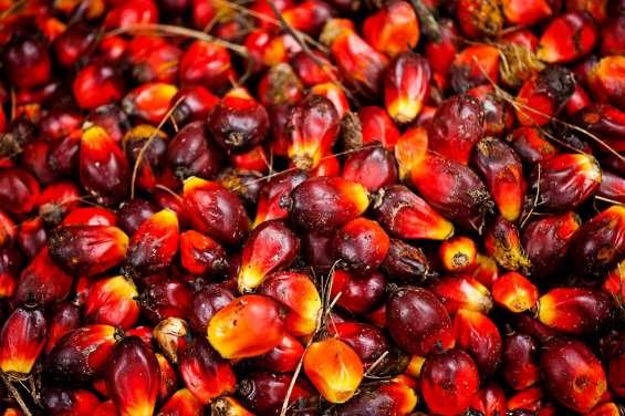 Aceite de palma refinado y crudo y aceite de girasol