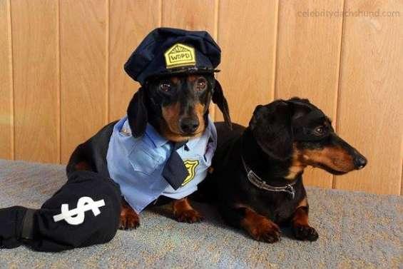Guardia de seguridad urgente
