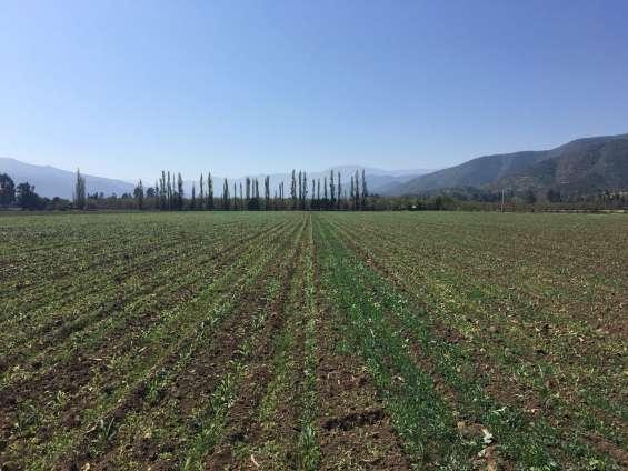 Terreano plano agricola