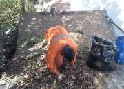 Limpieza de canaletas y ramas de arboles