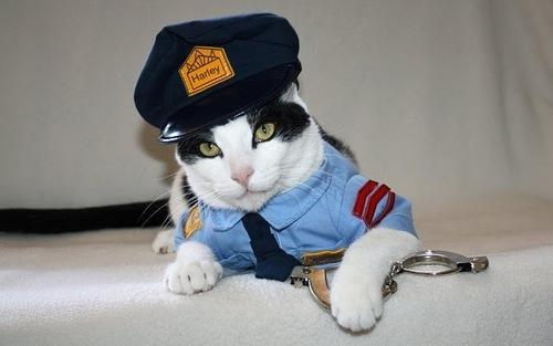 Guardia de seguridad en santiago