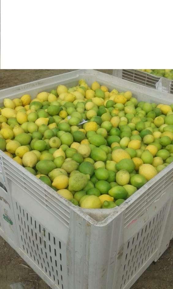 Venta de limones por mayor