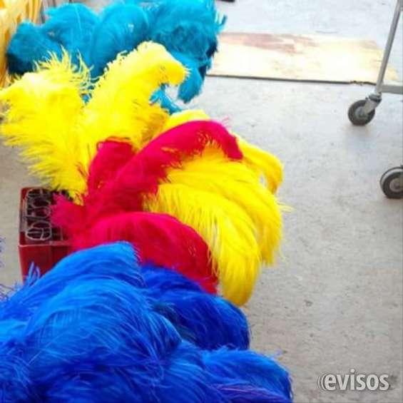 Plumas de y de pavo para trajes de carnaval y para trajes pascuences