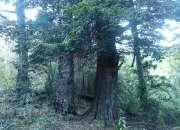 Parcela 11 hectareas, villarrica-los laureles