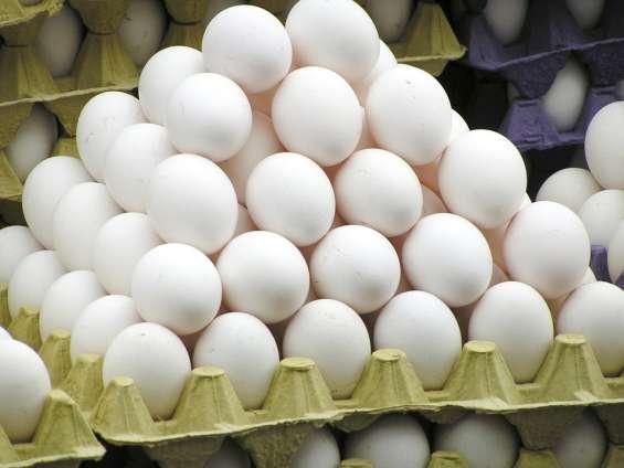 Bandejas para huevos usadas