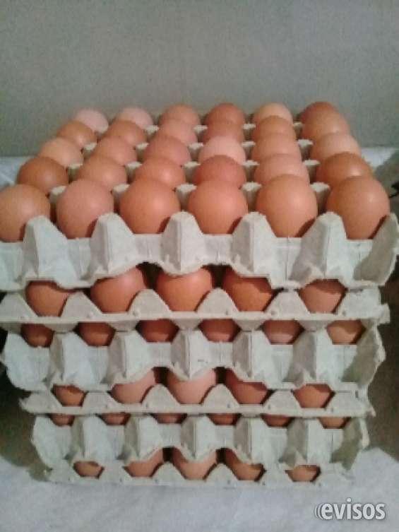 Huevos de campo de gallinas libres y felices