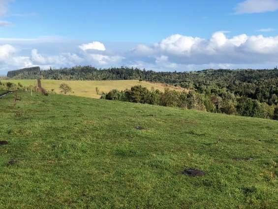 Venta de campo 90 hectareas belben