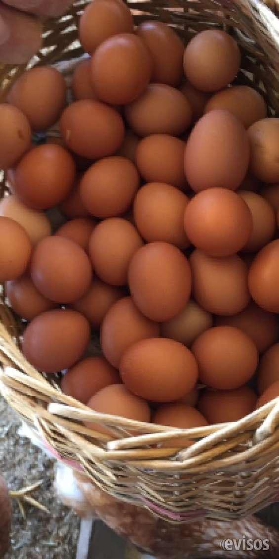 Huevos de campo garantizados