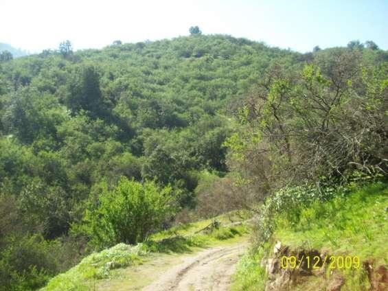 Fotos de 50 hectareas  aurora curacavi, cercana santiago, areas protegidas 3