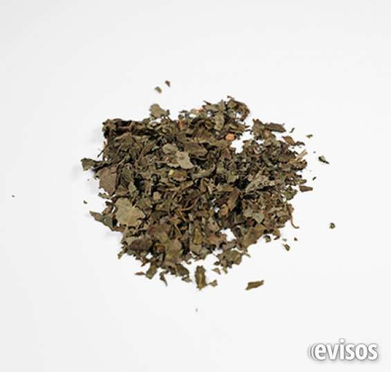 Salvia divinorum extractos