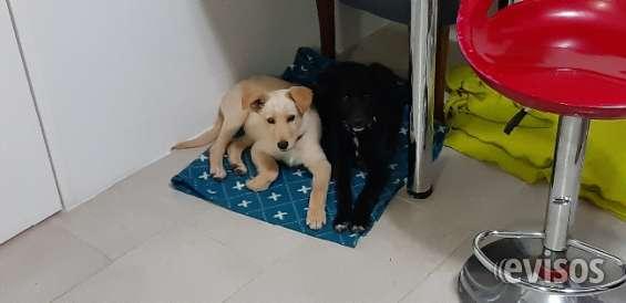 Regalo 2 hermosos cachorros hermanos