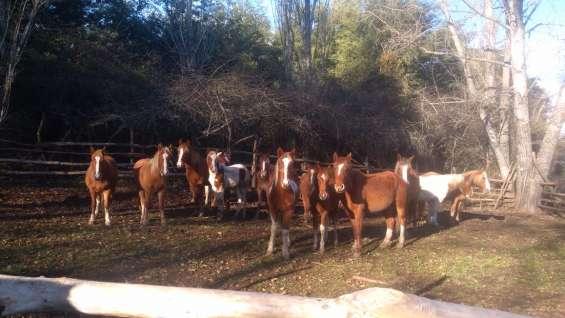 Se venden caballos