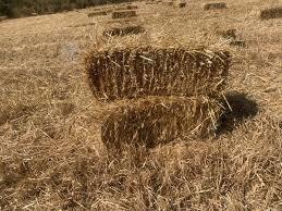 180 fardos de avena en rancagua